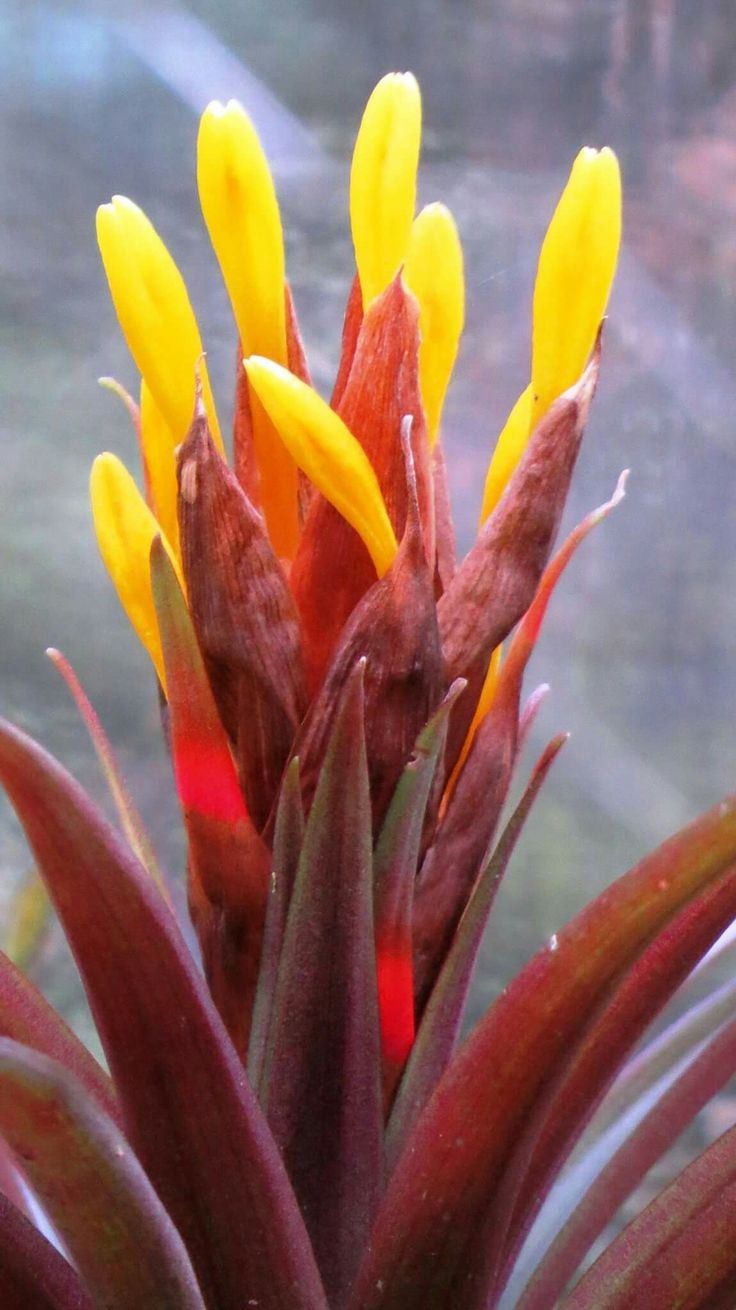 best jardines images on pinterest gardens plants and exotic