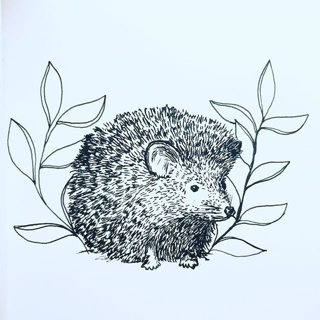 17. Hedgehog  I think this little one has been out in the rain- a little on the fluffier side!  Part of the #florafaunachallenge set by @felicityandink this #January . . . . #floralillustration #hedgehog #ink #freelance #drawing #freelancing #designer #weekend #makersgonnamake #fashion #textiles #nature #surfacepattern #print #ink #pattern #floral #flower #instaflower #handrawn #sundayfunday #animal #art #stephaniecoletextiles