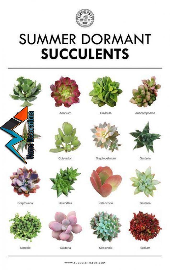 Suchen Sie Nach Etwas Hellem Und Frohlichem Fur Ihren Partytisch Versuchen Sie Diese Schokolade Pflanzen Sukkulenten Pflanzen Indoor