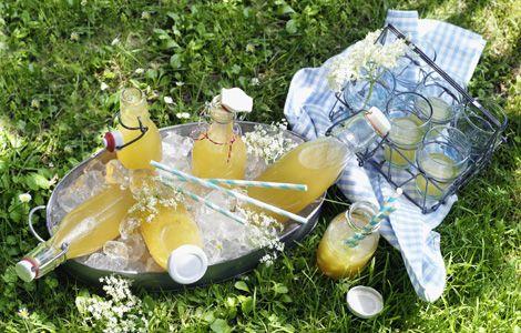 """Zutaten für 8 Flaschen oder Gläser à ca. 300 ml Inhalt: 15 große Holunderblütendolden, 500 ml Orangensaft, 2 Bio-Orangen, 10 g frische Ingwerwurzel, 300 g SweetFamily """"Unser Feinster"""" Zucker, 1 Beutel Zitronensäure, 1,5 l gekühltes Mineralwasser mit Kohlensäure, Eiswürfel nach Bedarf. Zubereitung: 1. Holunderblütendolden verlesen, vorsichtig ausschütteln und die dicken Stiele entfernen. Blüten mit Orangensaft mischen und mind. 6 Stunden oder über Nacht im Kühlschrank ziehen lassen.  2…"""