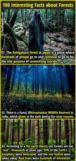 100 Interesting Facts about Forests | Pin | Fun facts, Weird facts