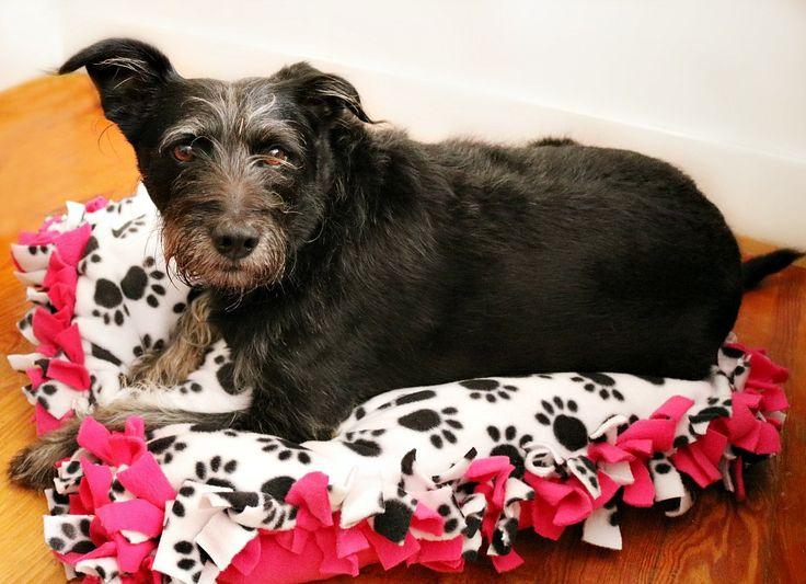 Best 25+ Cheap dog beds ideas on Pinterest   Diy dog bed Pet beds and Pet beds for dogs & Best 25+ Cheap dog beds ideas on Pinterest   Diy dog bed Pet beds ... pillowsntoast.com