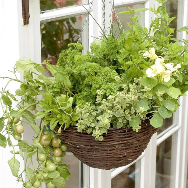 136 best hanging baskets images on pinterest landscaping decks herb hanging basket workwithnaturefo