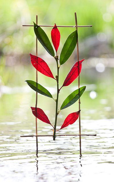 Red Green Laurel by escher is still alive, via Flickr