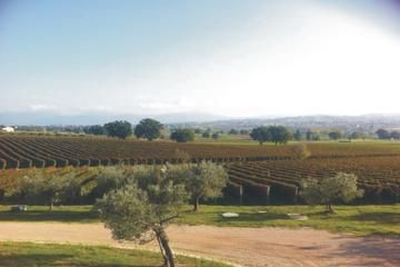 Private Tuscany Wine Tour Experience from Florence - Florence | Viator