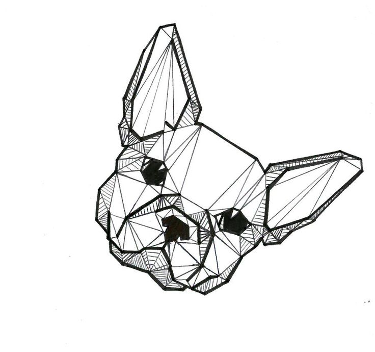 Frenchie! french bulldog Illustration