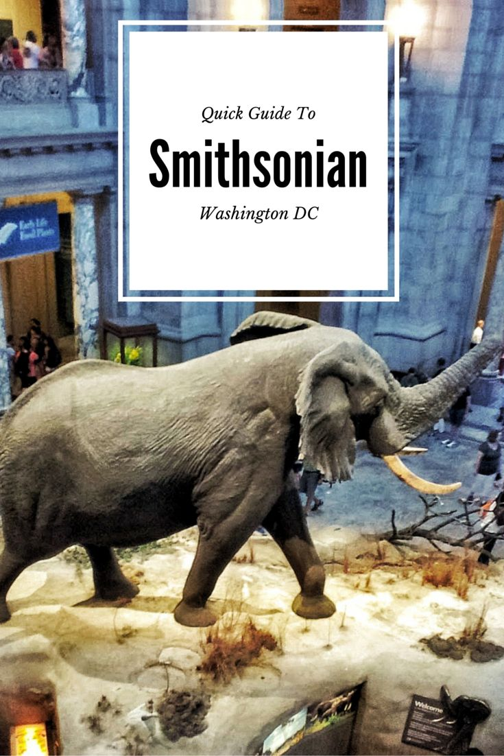 This is the one and only guide you will ever need to the Smithsonian. From what to pack to what to see, P2E has compiled all your resources into one comprehensive article.