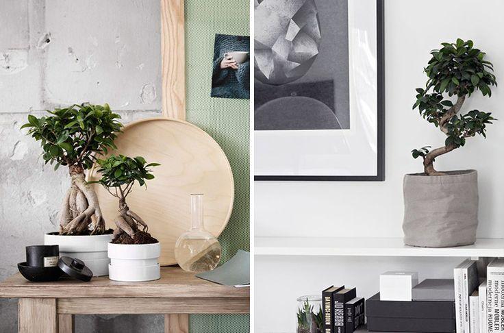 plants-creative-work-space-04-1