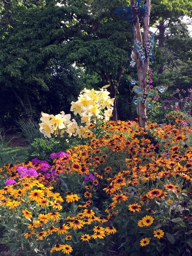 Annuals, black-eyed susans, coneflowers and an extra large oriental lily by the name of 'Big Brother'.