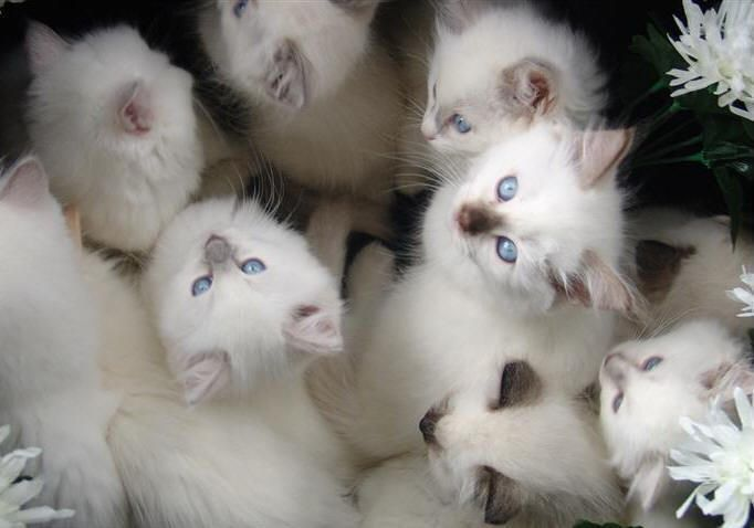cat excessive grooming