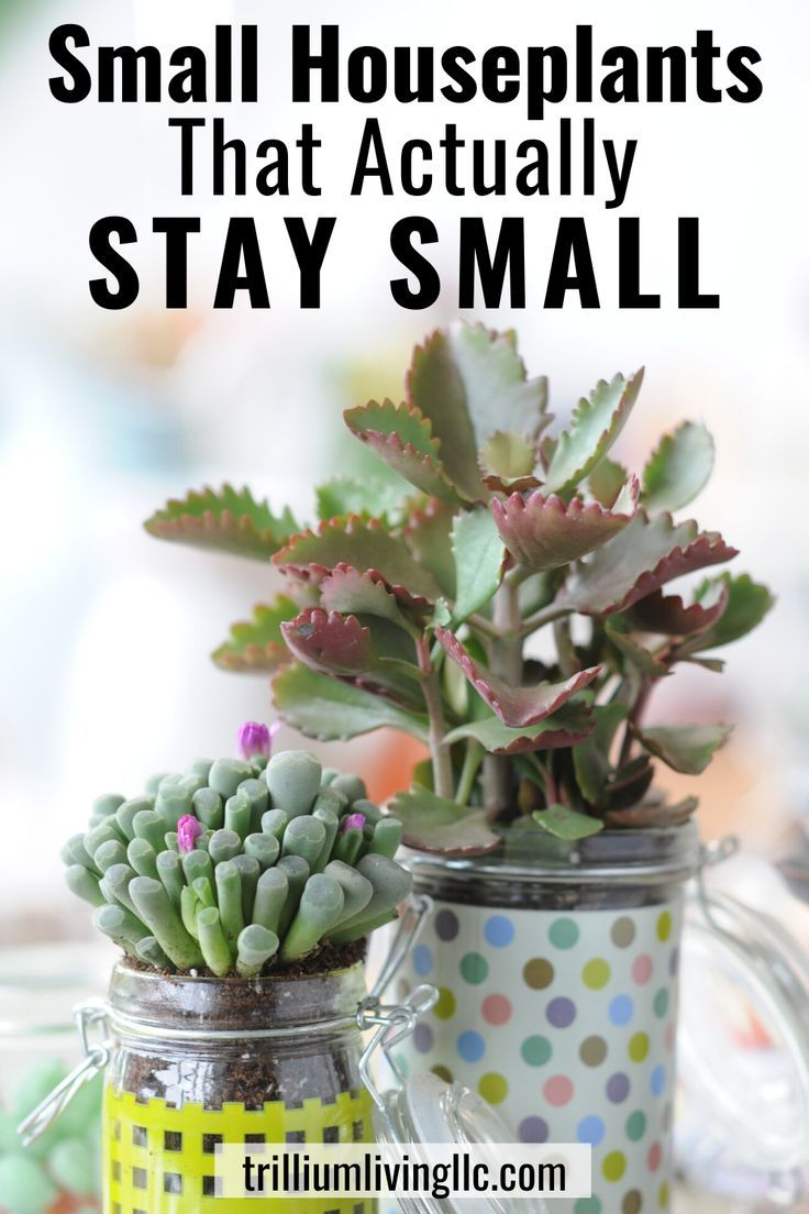 Small Houseplants That Actually Stay Small In 2020 Small Indoor Plants Growing Plants Indoors Small House Plants