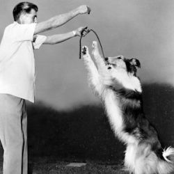 Dogs Synchronize Body Movements With Humans