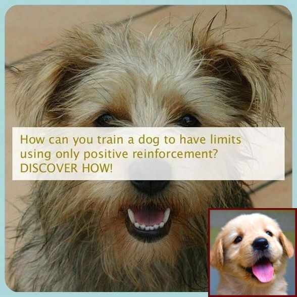 How To Train Your Dog To Stay Off The Furniture And Dog Training
