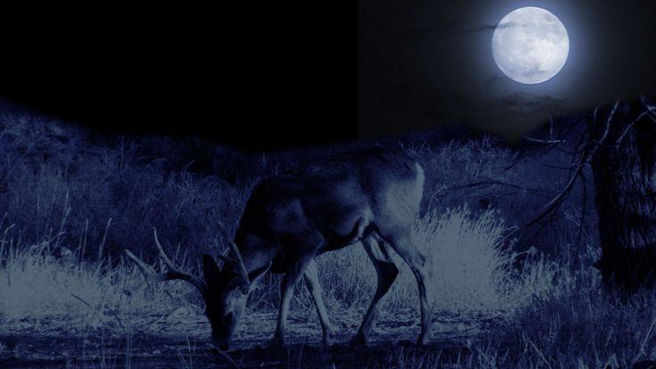 July's Full Buck Moon