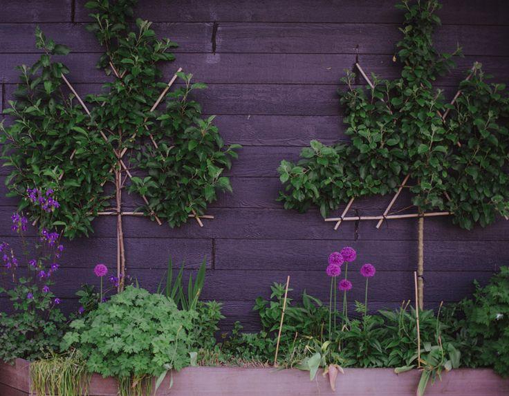 Fruit uit eigen tuin, zonder dat het veel ruimte kost!