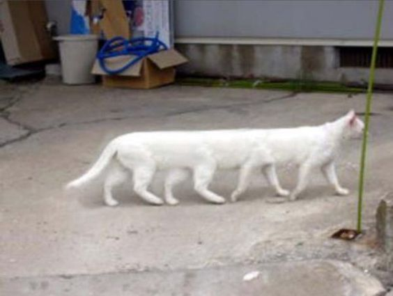 パノラマ写真の失敗作の衝撃が強すぎる(猫の足は8本、犬の顔は3個) - Togetterまとめ