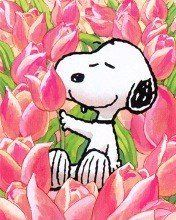 Snoopy in tulips