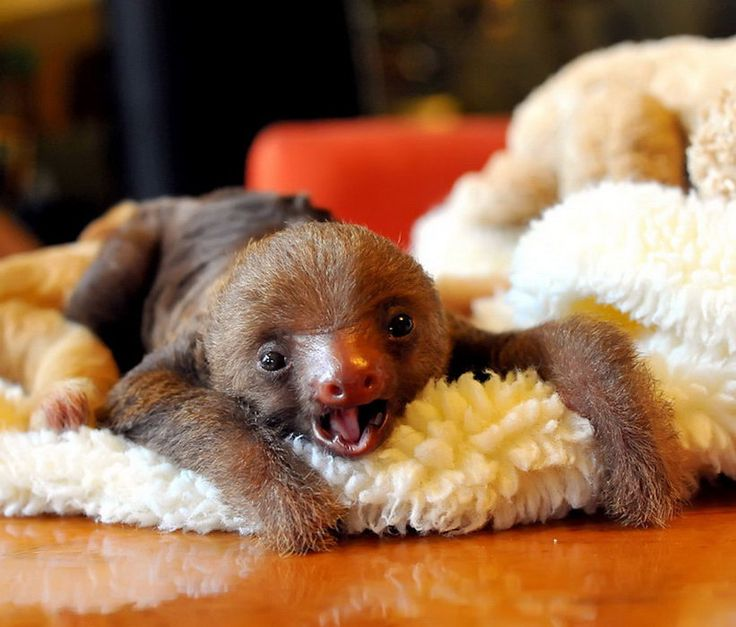 Sloths are my favorite!