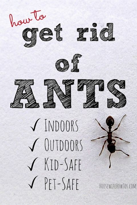 1000 ideas about ant remedies on pinterest homemade ant killer ant problem and sugar ants. Black Bedroom Furniture Sets. Home Design Ideas