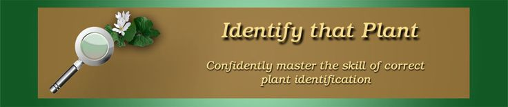 Identify that Plant | Confidently master the skill of correct plant identification    --------- I haven't explored this site yet but I wanted to save it here  :)