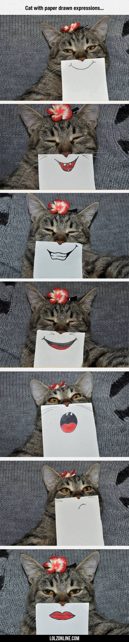 Cat With Paper Drawn Expressions...#funny #lol #lolzonline