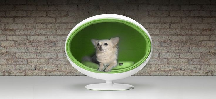 Gambar dari Model Tempat Tidur Modern Untuk Hewan Peliharaan Anjing » Gambar 2