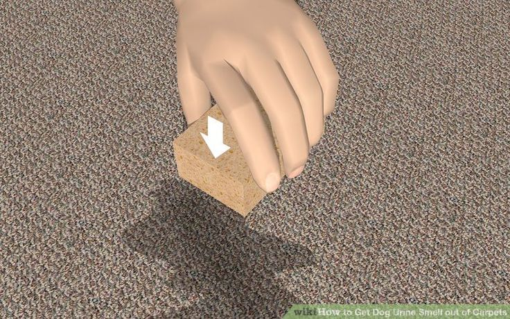 3 Ways to Get Dog Urine Smell out of Carpets - wikiHow