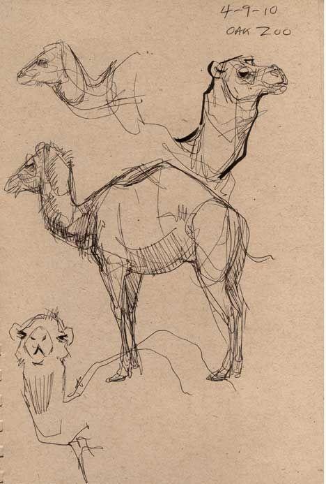 Hier sind ein paar Skizzen die ich im Oakland Zoo in einer Tierzeichnung gemacht habe