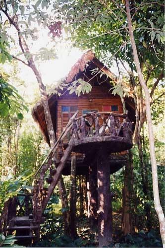 Casa sull'albero: quanti la vorrebbero provare, anche solo per una notte?