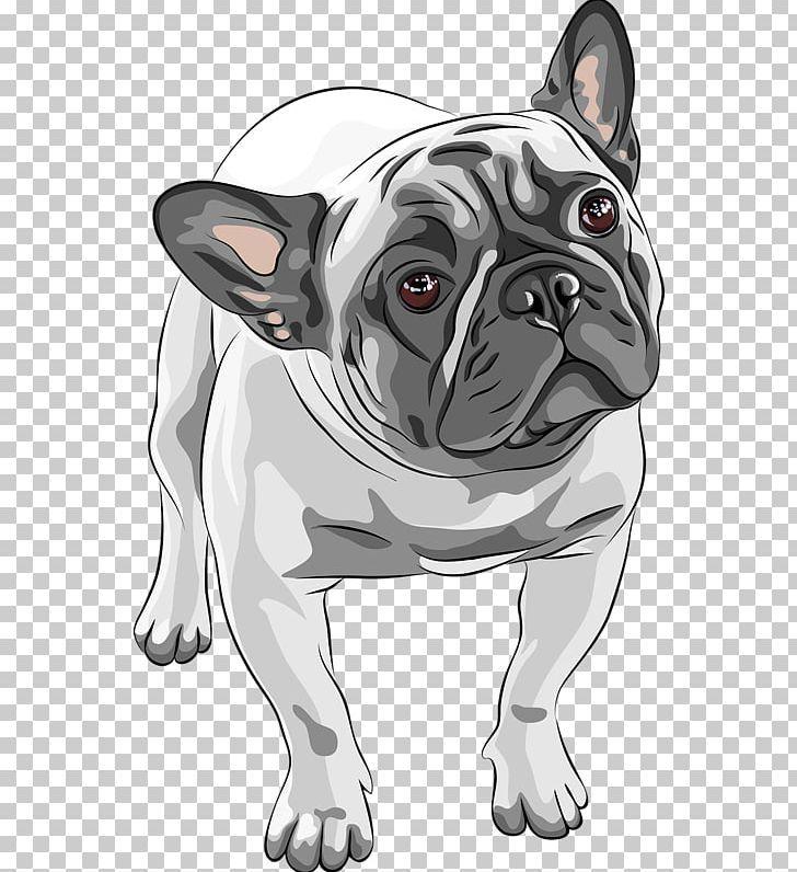 French Bulldog American Bulldog Puppy Png Animals Breed Bulldog Carnivoran Cartoon American Bulldog Puppies Bulldog Puppies Bulldog