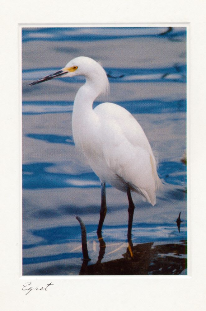 Egret Card from Anonymous in Liberty, Maine