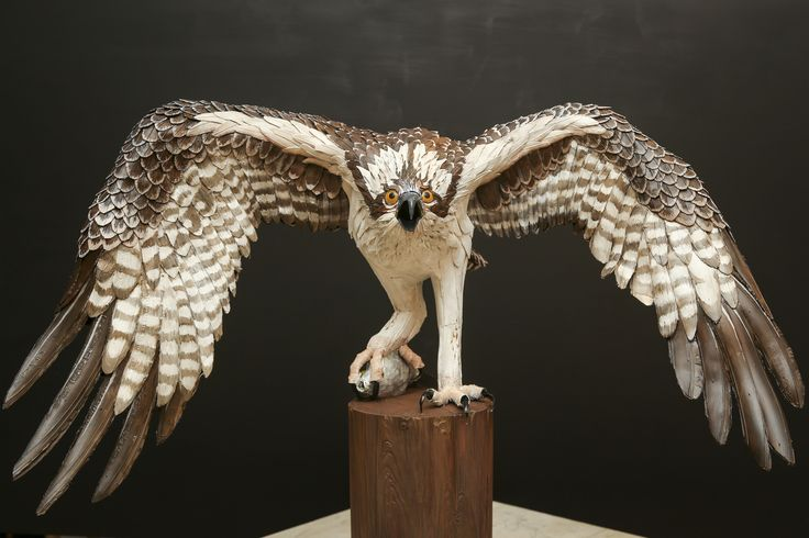 """""""The Osprey""""  Donated to and raised $4000 for the J.N. Ding Darling Wildlife Refuge on Sanibel Island"""