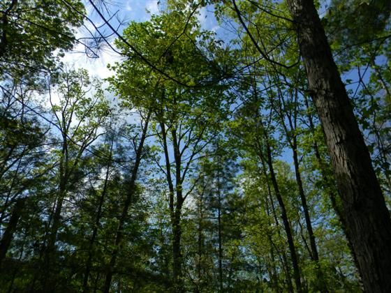 In the desirable White Hall Magisterial District and Buck Mountain Creek watershed area Picture your dream home to be built here Beautiful land and surroundings Lot has gravity fed conventional perc 4 bedroom soil study done in 2008 call for plats.  Lot 2 has many mature hardwoods and some flowering trees. The lot lends itself to a walk-out basement. Just minutes from GE NGIC and shopping yet very quiet and peaceful.  Earlysville is an unincorporated community 9 miles North of the city of…