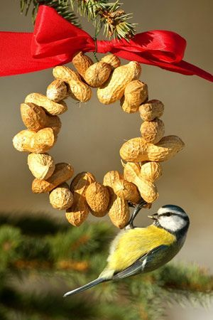 A peanut ring serves as bird food and Christmas decoration at the same time.
