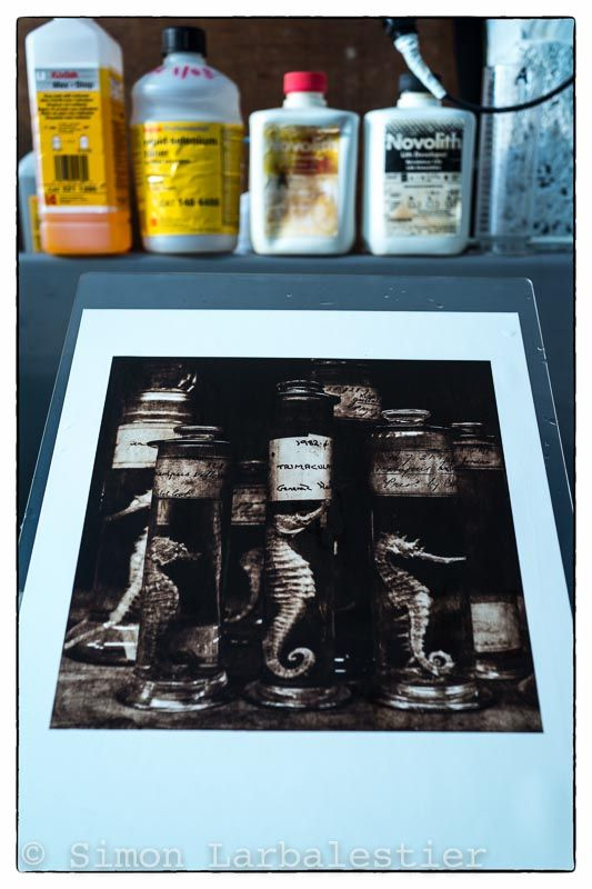 """""""Seahorses"""" One of the final selenium split-toned silver lith prints fresh out of the toning tray prior to its final archival wash. © Simon Larbalestier."""