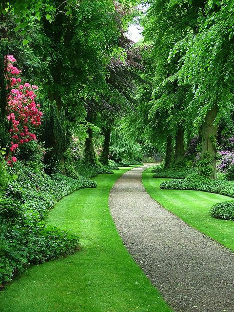 Majestic trees line a path