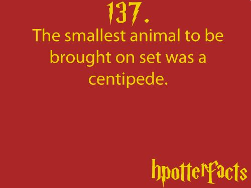 Harry Potter Facts #137:    The smallest animal to be brought on set was a centipede.
