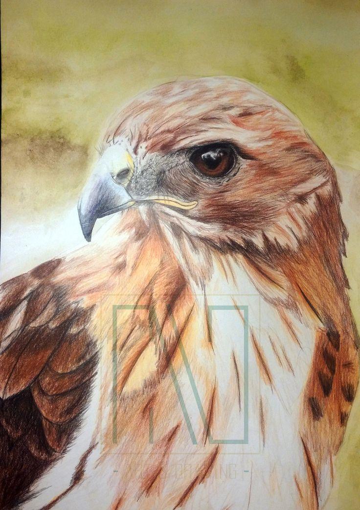 Faucon. Crayon de couleur sur papier Canson A3 Calogero - Art & Drawing