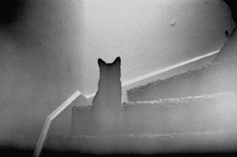 ghost kittyGhosts Stories, Capture Ghosts, Cat Ghosts, Mornings Ghosts, Ghosts Ghosts, Ghosts Kitty, Ghosts Cat1224426697 1
