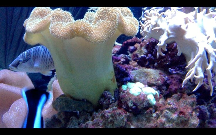 Океанариум на Чистых прудах. Коралловый риф.