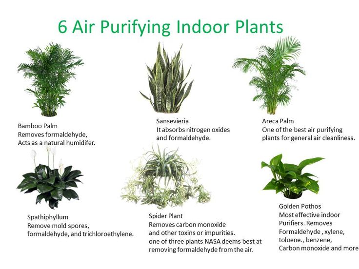 Nasa Concluded That 15 To 18 Air Filtering Plants In A House With An