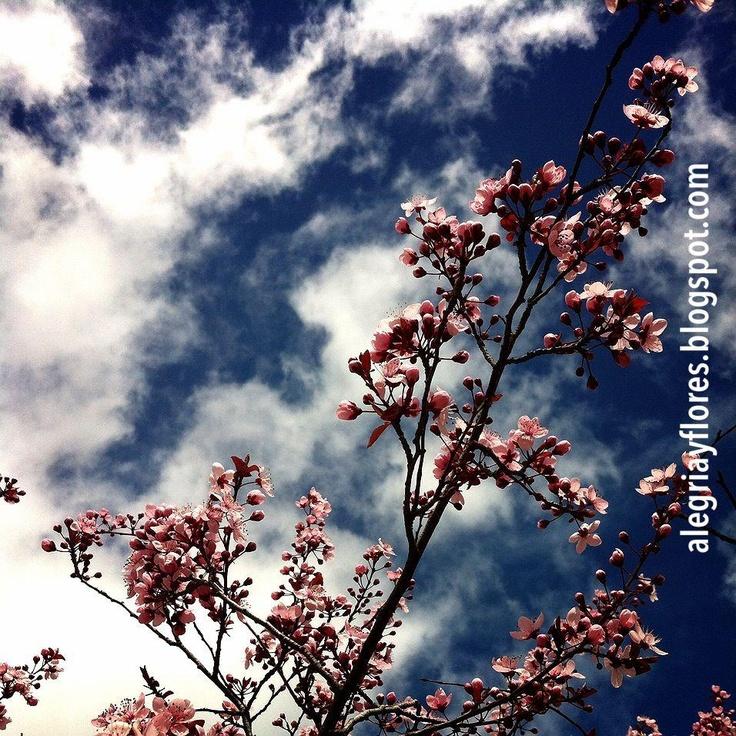 http://alegriayflores.blogspot.com.es/