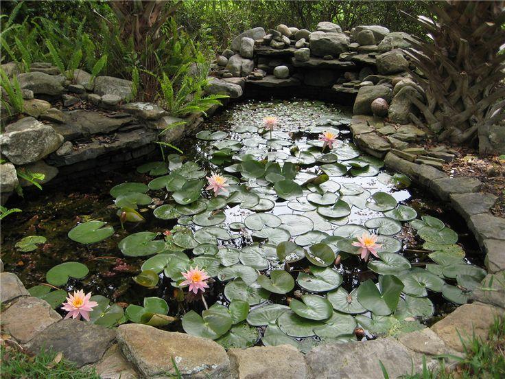 water garden designs pictures | garden design ideas