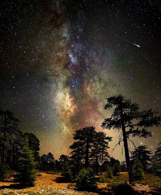 ~~Deep space, deep in the forest ~ astrophotography, Milky Way and stars, Cyprus by CostaDinos~~