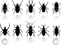 Image result for black and white images of bugs