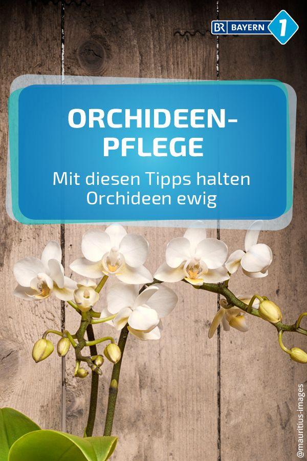 Orchideen Pflege: Mit diesen Tipps haben Sie mehr von Ihrer Orchidee