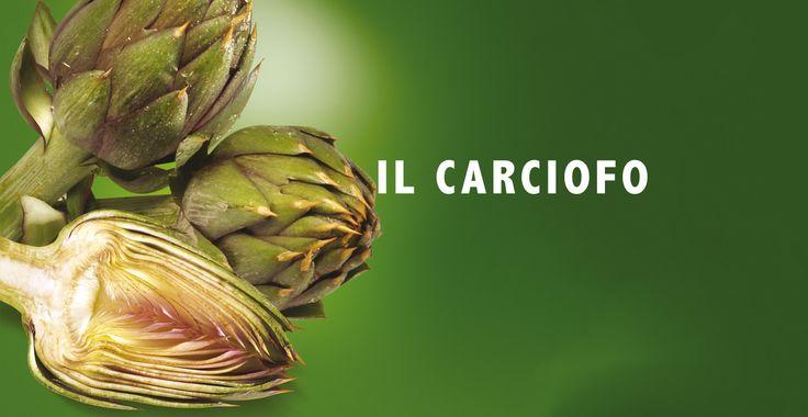 Tintura Madre di Carciofo: depurativo, diuretico, disintossicante, ipoglicemizzante.