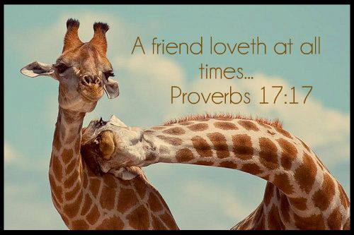 Proverbs 17:17. Friends...