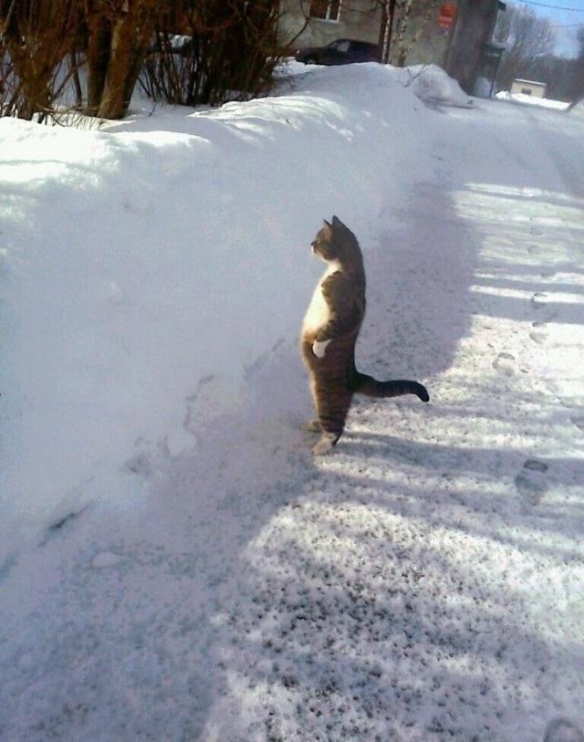 Standing cat!