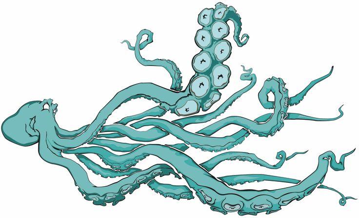 octopus illustration - Google Search